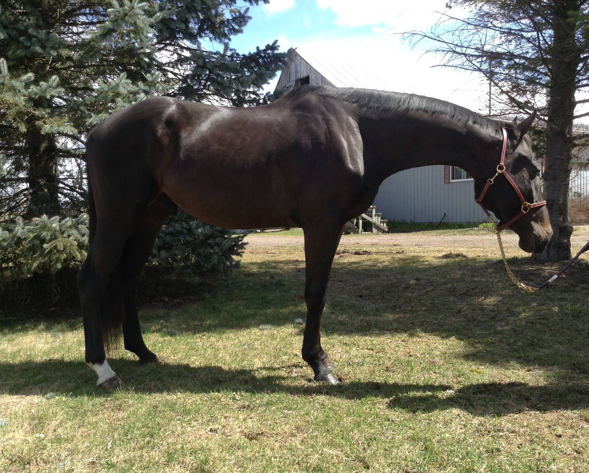Hunter/Jumper and Equitation Horses Sold