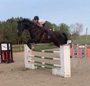 jumper horse for sale