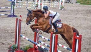 jumper gelding for sale