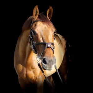 featured horse for sale ads